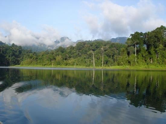 Vous pouvez apercevoir la jungle tropicale de la Thaïlande